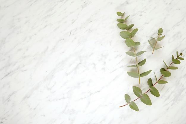 Ramas de eucalipto sobre fondo de mármol