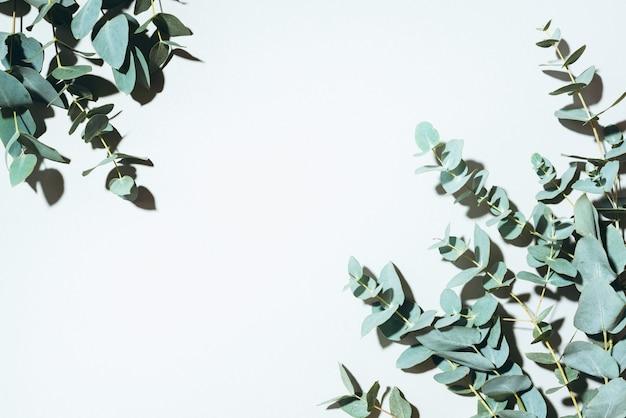 Ramas de eucalipto sobre fondo verde pastel.