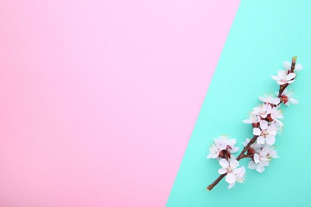 Ramas florecientes de la primavera en un fondo colorido.