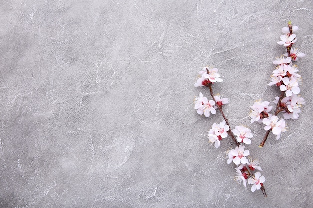Ramas florecientes de primavera sobre un fondo de hormigón gris.