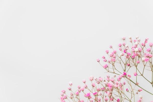 Ramas de flores rosadas frescas
