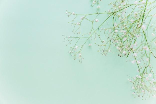 Ramas de flores verdes en la mesa
