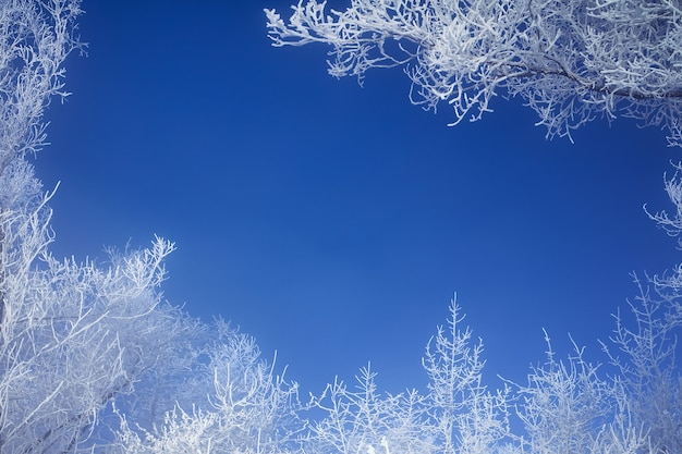 Ramas heladas de los árboles de invierno contra el cielo azul. las ramas forman un marco de fotos