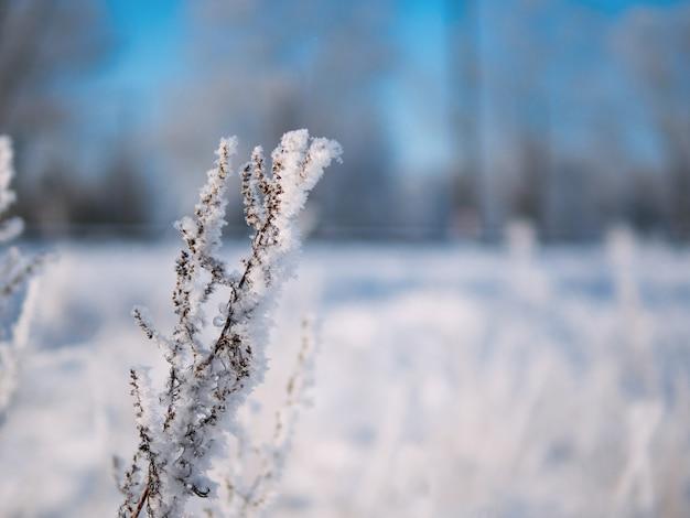 Ramas heladas mañana de invierno