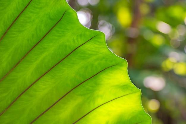 Ramas de hojas de helecho verde