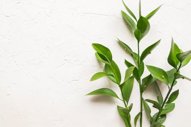 Ramas con hojas verdes frescas de ruscus sobre fondo con textura de hormigón blanco