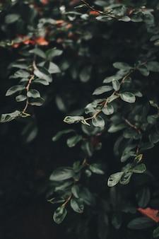 Ramas y hojas verdes de una planta grande.