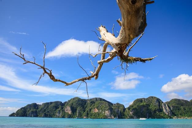 Ramas muertas extendidas al mar y montaña de roca con fondo de cielo azul