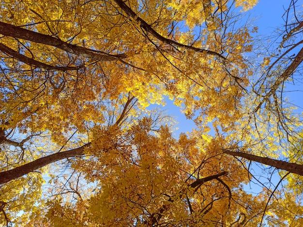 Ramas de otoño con hojas sobre un fondo de cielo azul
