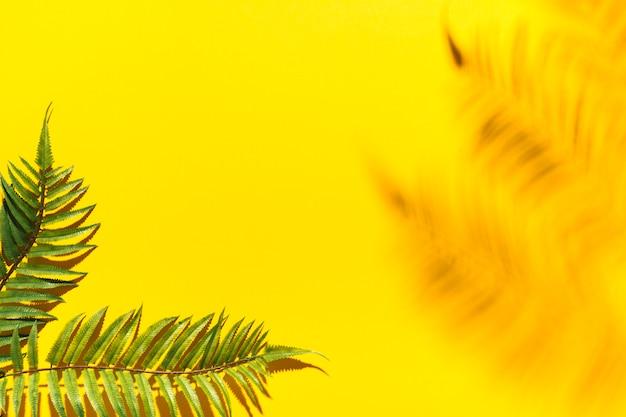 Ramas de palma y sombra borrosa en superficie colorida