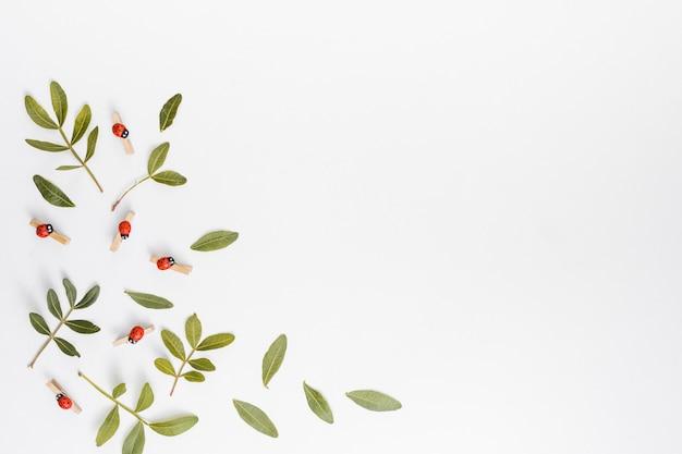 Ramas de plantas verdes dispersas en mesa blanca