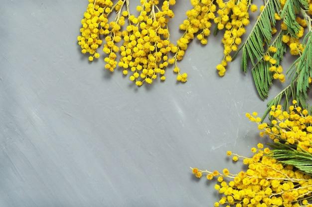 Ramas de primer plano de mimosa en flor en hormigón gris