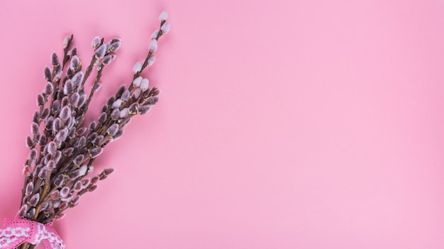 Ramas de sauce con amentos en mesa rosa
