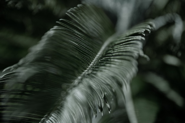 Ramas tropicales de palmeras con hojas texturizadas. concepto de vegetación en climas cálidos.
