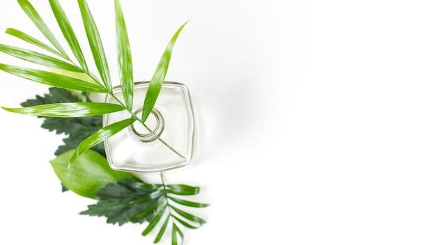 Ramas verdes en botella de vidrio