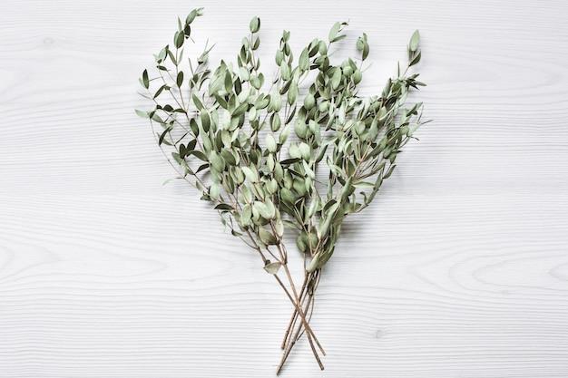 Ramas verdes de eucalipto en madera blanca