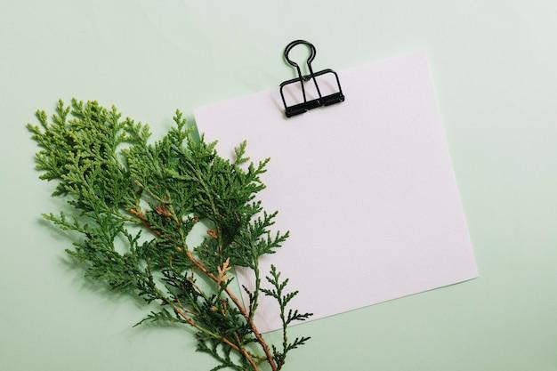 Ramita de cedro con papel blanco en blanco con clip sobre fondo en colores pastel