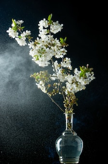 Ramita de flores de cerezo en humo y gotas de agua sobre negro
