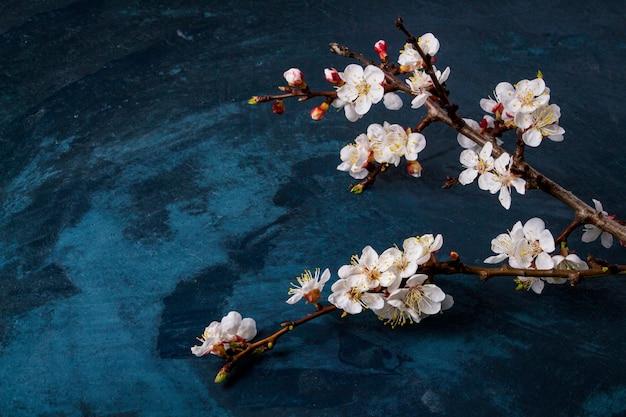 Ramita de flores de cerezo sobre una superficie azul oscuro