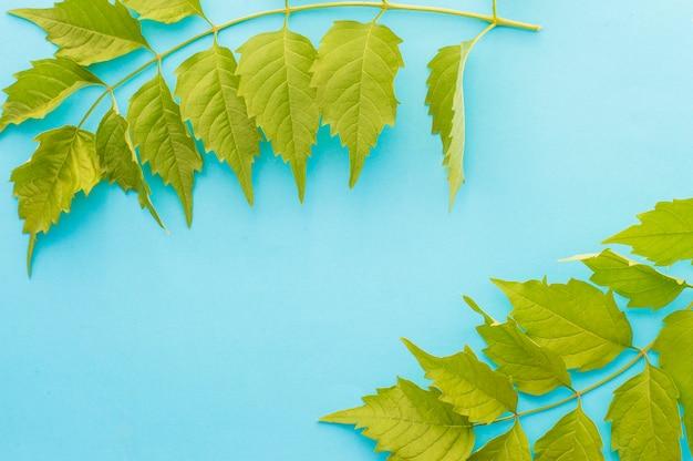 Ramita de hojas en un azul
