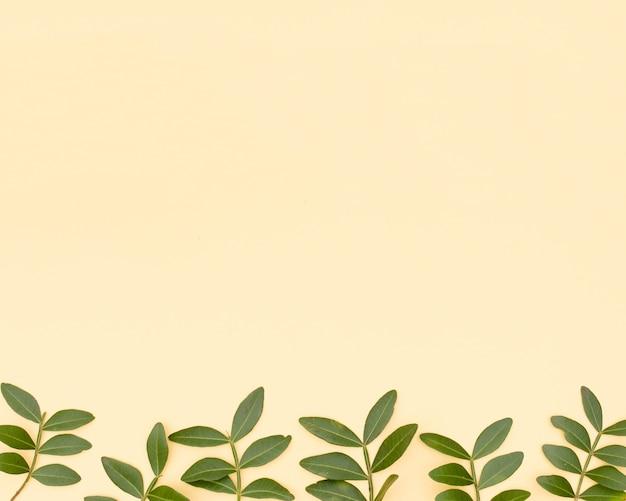 Ramita de hojas frescas dispuestas en fila sobre superficie amarilla