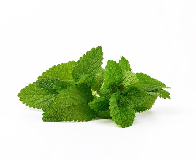 Ramita de menta con hojas verdes sobre un fondo blanco.