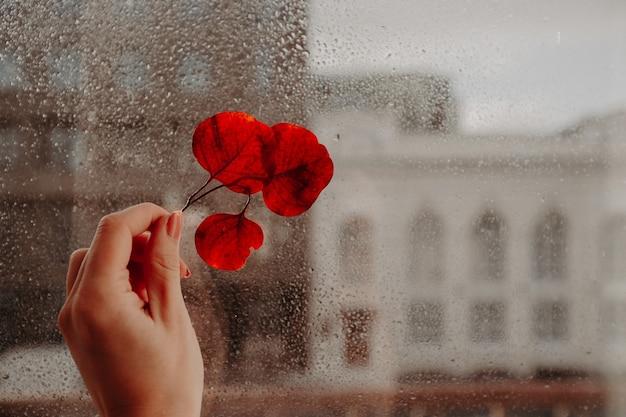 Ramita de pétalos rojos secos en la mano contra el cristal de la ventana