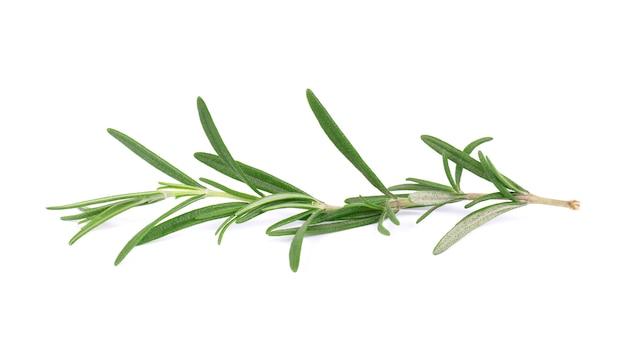 Ramita de romero fresco aislado sobre fondo blanco. rama de romero