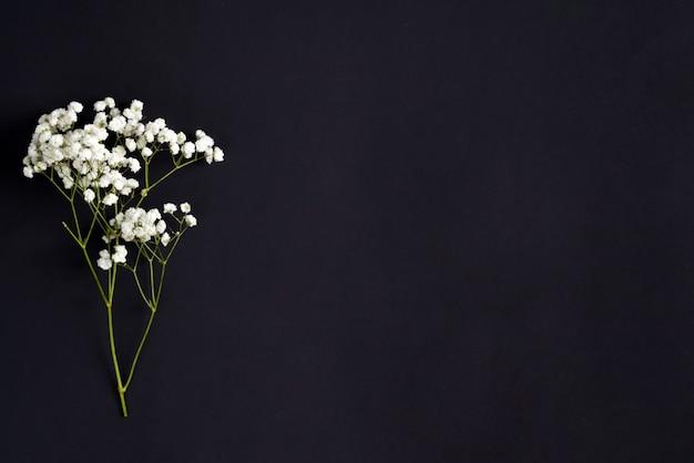 Ramitas de flores frescas de gypsophila planta como borde de saludo de esquina sobre un fondo negro. vista superior.