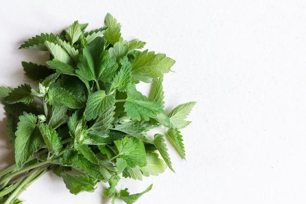 Ramitas de menta fresca. el concepto de alimentación saludable. es útil de usar al preparar té.