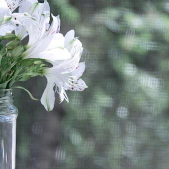 Un ramo de alstroemeria blanco en un frasco de vidrio se encuentra bajo los rayos del sol.