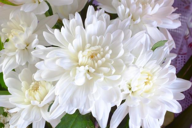 Ramo de crisantemo blanco.