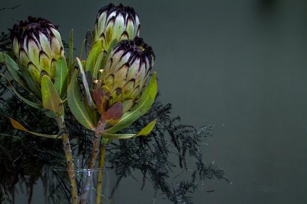 Ramo demoníaco de protea negra y espárragos en un florero de vidrio sobre un fondo oscuro, enfoque selectivo