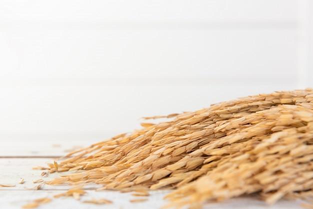 Ramo de espigas de arroz
