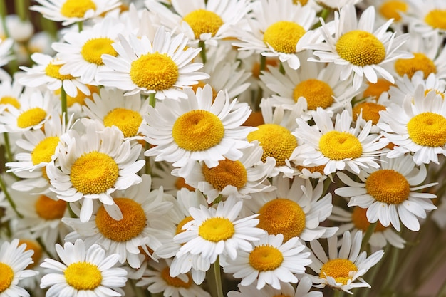 Ramo de flores florecientes margaritas