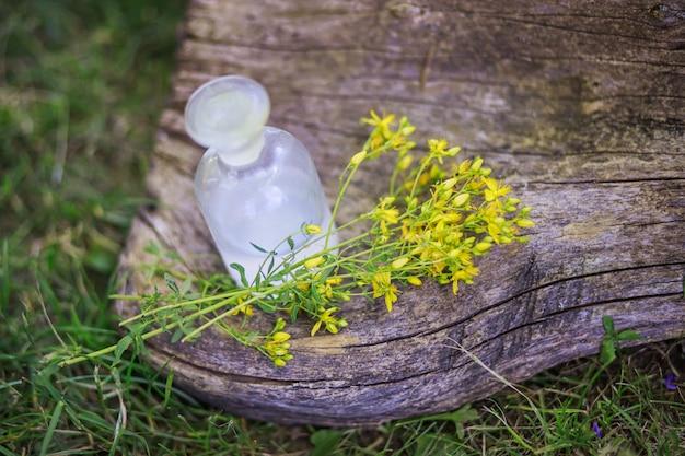 Ramo de flores hypericum recogidas en un prado para la preparación de medicamentos y tinturas. botella transparente con elixir de corcho. botella de medicina