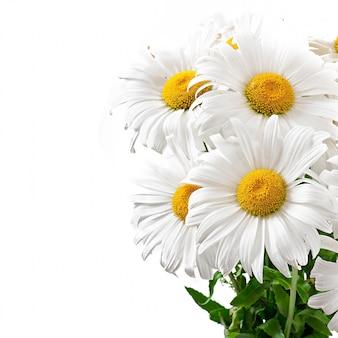Ramo de flores de margaritas en blanco aislado