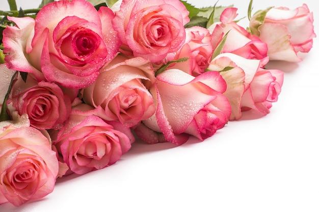 Ramo de flores rosa rosa sobre fondo blanco.
