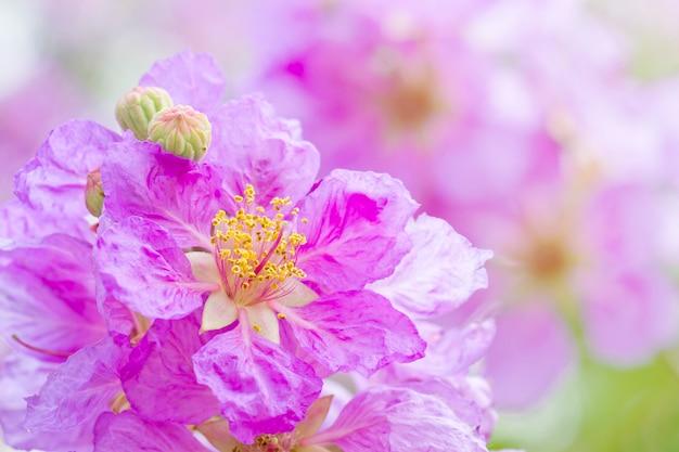 Ramo de flores rosadas en flor, cananga odorata en el jardín