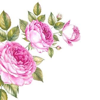 Ramo de flores rosas. ilustración botánica acuarela vintage.