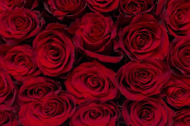 Ramo de flores: rosas rojas frescas
