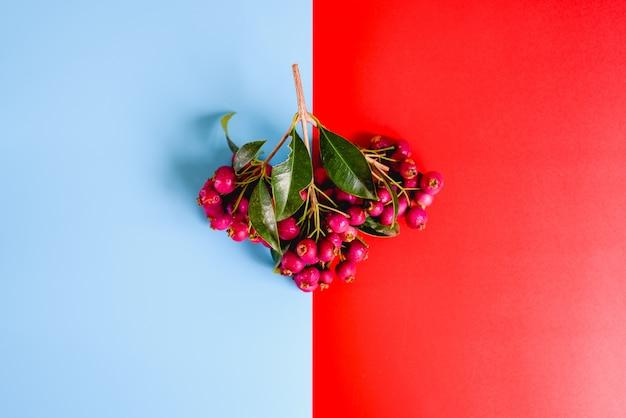 Ramo de frutas otoñales púrpuras aislado en un fondo rojo y azul.