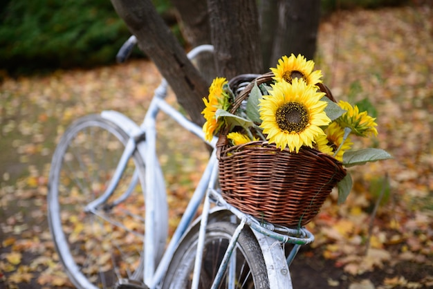 Ramo de girasoles en canasta de paja en bicicleta de estilo retro