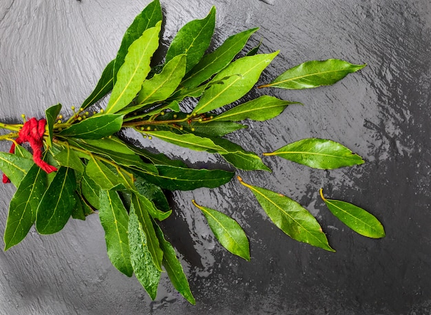 Ramo de hojas de laurel frescas sobre fondo negro.