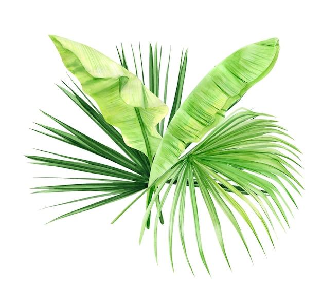 Ramo de hojas de palma verde. planta tropical. ilustración acuarela pintada a mano aislada en blanco.