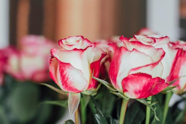 Ramo de muchas rosas