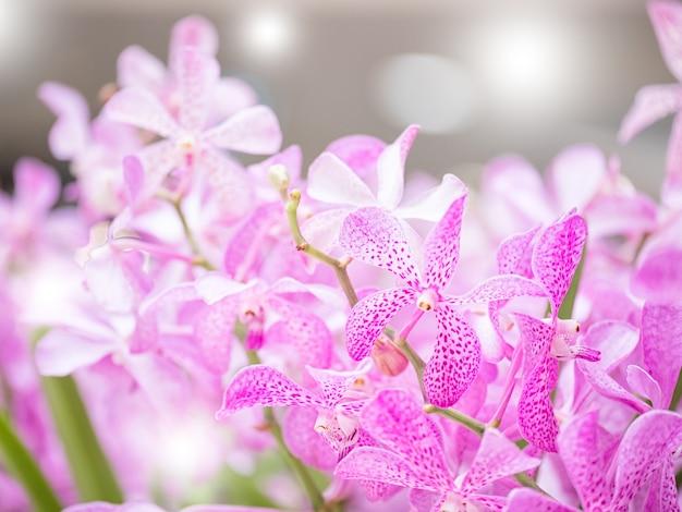 Ramo de la orquídea de mokara en el jardín, el filtro suave y el fondo borroso.
