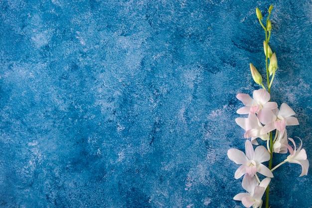 Un ramo de orquídeas sobre un fondo azul y blanco.