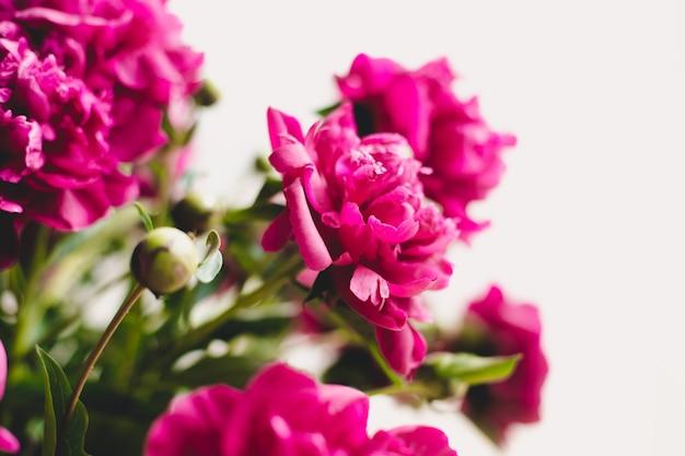 Ramo de peonías en flor. bodegón con un ramo de peonías. tierna peonía rosa