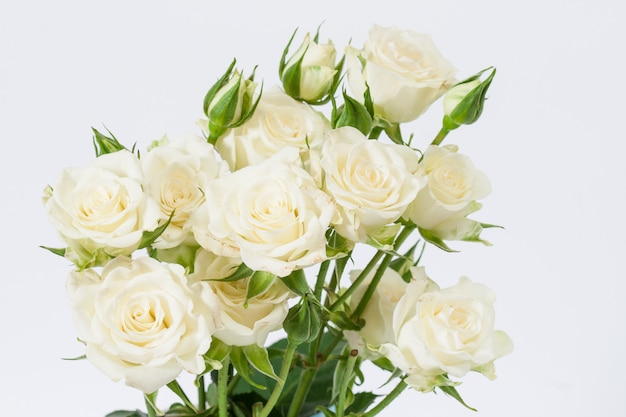 Ramo de rosas blancas sobre un fondo blanco
